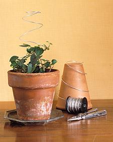 Miniature Topiary